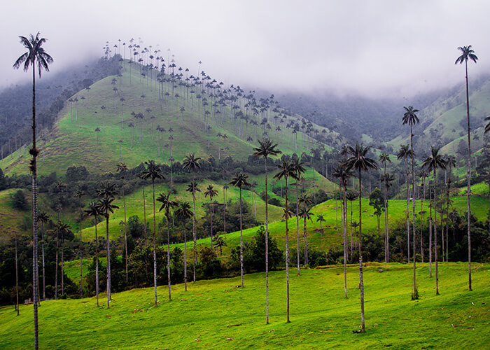Foggy landscape of green tropical mountains